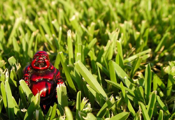 Grass Is Always Greener Quotes: Tiny Wisdom: Plant Tiny Seeds For Joy
