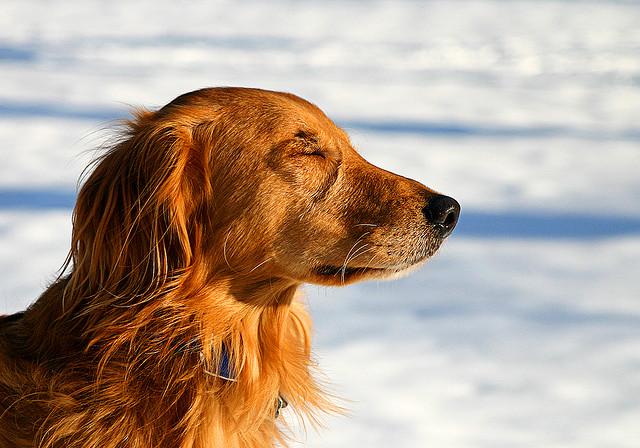 Dog practicing mindfulness