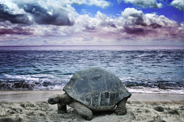 Why Slow is the Way to Go: 6 Reasons to Take Your Time