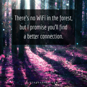 There's No WiFi in the Forest But You'll Find a Better Connection
